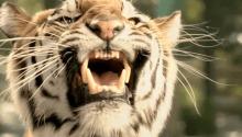 "FOX UFC ""Zoo"" - Joseph Kahn"